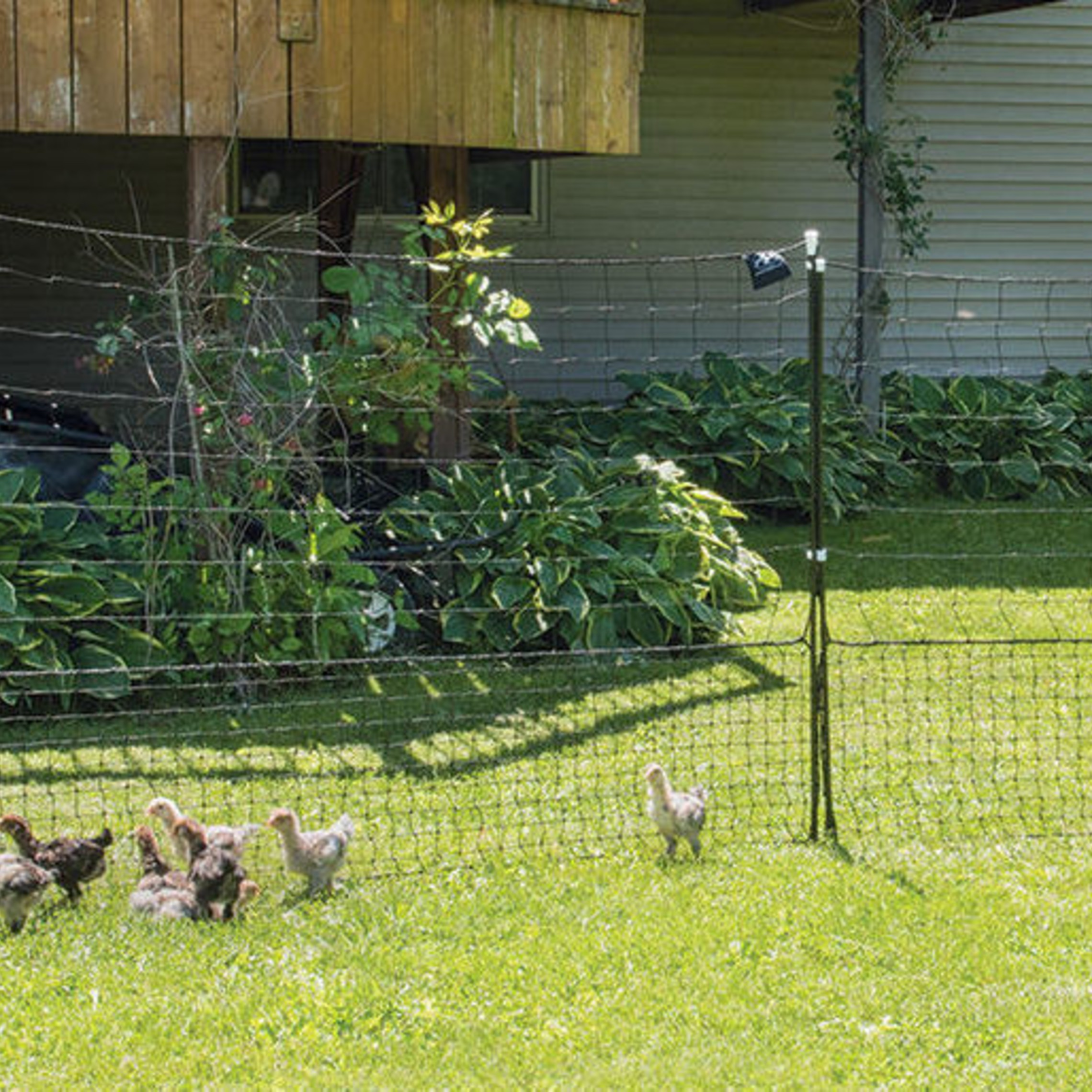 portable fencing with chicken rental